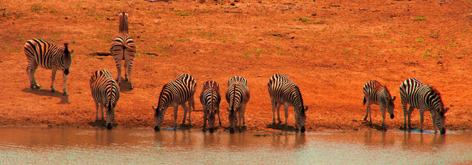 Kruger-National-Park-Limpopo-South-Africa