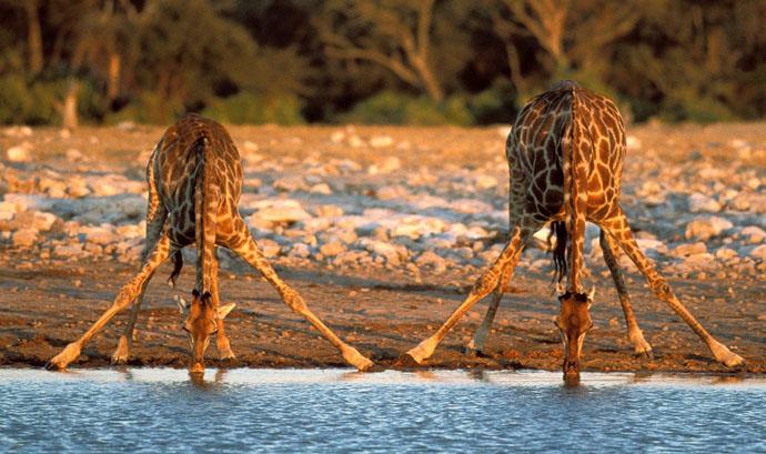 kruger-national-park-south-afrika-4