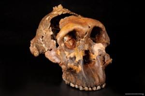 La cuna de la Humanidad, exposición sobre la evolución humana en Alcalá de Henares. Madrid